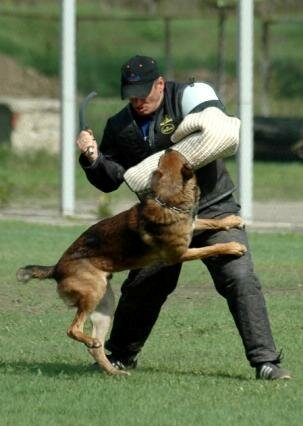 Лучшая Собака Февраля