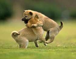 Воспитание Щенка 200703131714410.puppy2