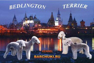 "бедлингтон терьеров ""Barchuki.ru"""