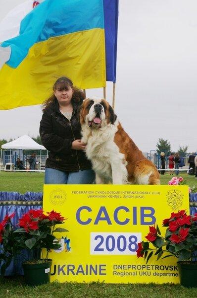 СЕНБЕРНАРА щенки, www.kennel-prim.narod.ru