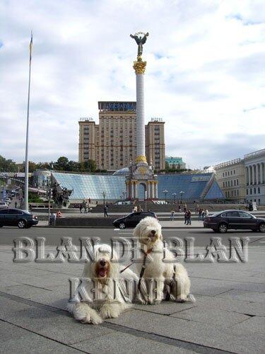 Blan-de-Blan - питомник Южнорусских овчарок и Золотистых ретриверов