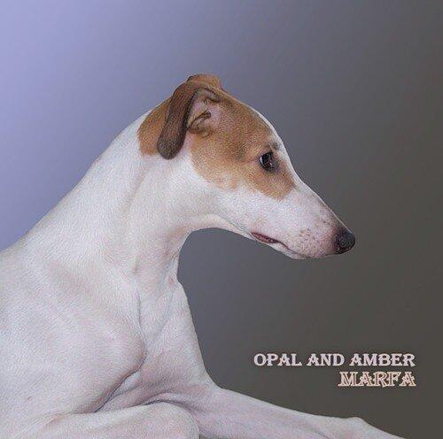 Опал Энд Амбер (Opal&Amber)