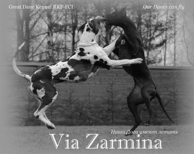 Via Zarmina