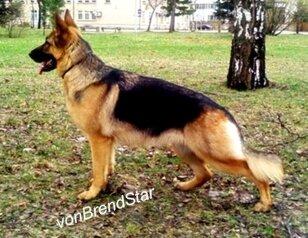 VomBrendStar