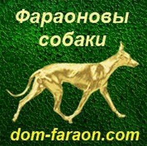 """Монопородный питомник Фараоновых собак """"DOM PHARAON"""""""