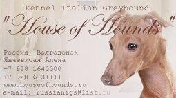 """Питомник левреток """"House of Hounds"""""""